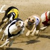 Greyhound Racing Stag Do